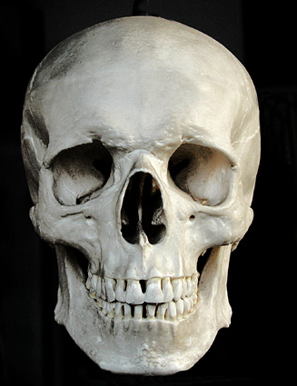 Um cr 226 nio humano foi encontrado por volta das 09h20 de ter 231 a feira